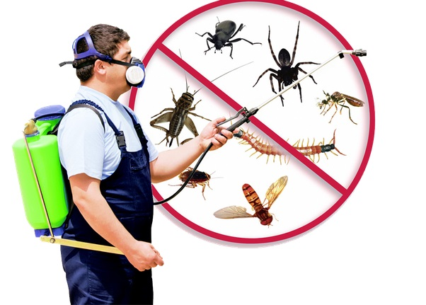 24 Hour Exterminators Near Me Tampa, FL 33601